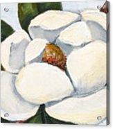 Magnolia On Blue Acrylic Print