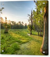 Magnolia Plantation Cypress Swamp Sunrise Acrylic Print