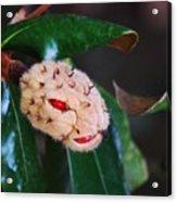 Magnolia Serpent Acrylic Print