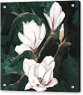 Magnolia Soulangeana Acrylic Print