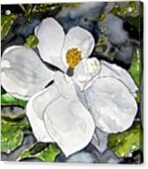 Magnolia Tree Flower Acrylic Print