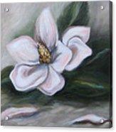 Magnolia Two - 2007 Acrylic Print