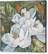 Magnolias Five Acrylic Print