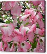 Magnolias Acrylic Print
