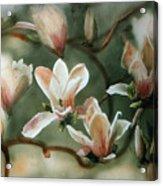 Magnolias In Bloom Acrylic Print