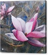 Magnolias In Shadow Acrylic Print