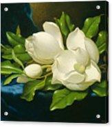 Magnolias On A Blue Velvet Cloth Acrylic Print