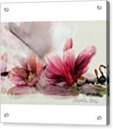 Magnolien .... Acrylic Print