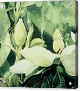 Magnolium Opus Acrylic Print