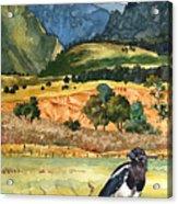 Magpie Acrylic Print