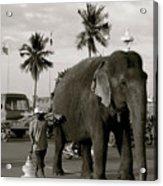 Mahout And Elephant Acrylic Print