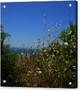 Maidenhair Ferns And Grasses On The Bluff Acrylic Print