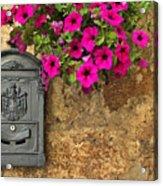 Mailbox With Petunias Acrylic Print