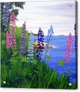 Maine Bay Lupine Flowers Acrylic Print