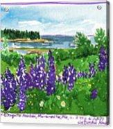 Maine Coast Purple Lupine Art Acrylic Print
