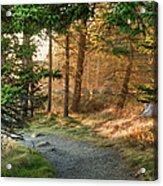 Maine Forest At Dusk Acrylic Print