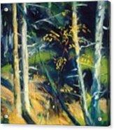 Maine Landscape 1919 Acrylic Print