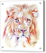 Majestic African Lion Acrylic Print