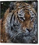 Majestic Bengal Tiger Acrylic Print