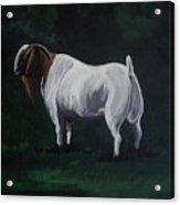 Majestic Boer Buck Acrylic Print