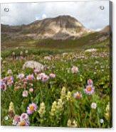 Majestic Colorado Alpine Meadow Acrylic Print