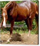 Majestic Horse Acrylic Print