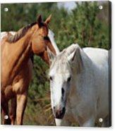 Majestic Horse Ride Acrylic Print
