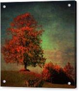 Majestic Linden Berry Tree Acrylic Print