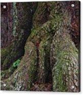 Majestic Tree Trunk Acrylic Print