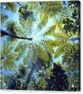 Majestic Treeferns Acrylic Print