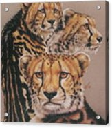 Majestic Vagabond Acrylic Print