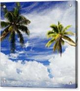 Majuro Atoll, Two Coconut Trees Lean Over Acrylic Print