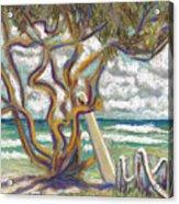 Malaekahana Tree Acrylic Print by Patti Bruce - Printscapes