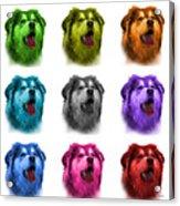 Malamute Dog Art - 6536 - Wb - M Acrylic Print