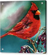 Male Cardinal And Snowy Cherries Acrylic Print