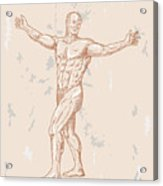 Male Human Anatomy Acrylic Print