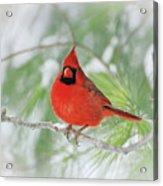 Male Northern Cardinal In Winter - 2 Acrylic Print