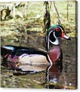 Male Wood Duck Wakulla River Acrylic Print