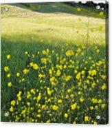 Malibu Creek Wildflowers Acrylic Print