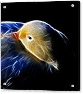 Mallard Duck Fractal Acrylic Print
