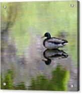 Mallard In Mountain Water Acrylic Print
