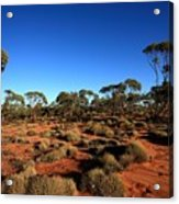Mallee And Spinifex Acrylic Print