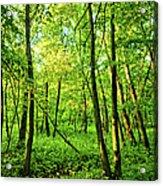 Mallory Woods Acrylic Print