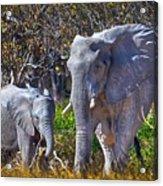 Mama And Baby Elephant Acrylic Print