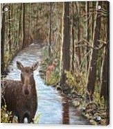 Mama Moose And Calf Acrylic Print