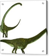 Mamenchisaurus Hochuanensis Acrylic Print