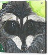 Mamma Raccoon  Acrylic Print
