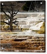 Mammoth Hot Springs Beauty Acrylic Print