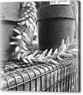 Manago Succulent Acrylic Print