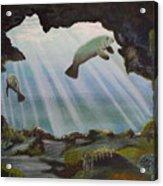 Manatee Cave Acrylic Print